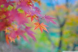 autumn colors in japan uhd desktop wallpaper for ultra hd 4k 8k