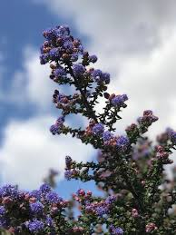 california native plant society blog wildlife gardening with california native plants