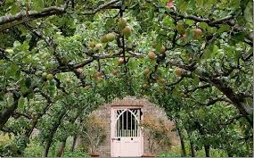 outdoor living curved green espalier fruit trees design