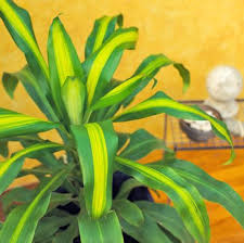green plants 20 easy houseplants you ll midwest living