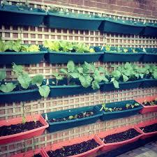 203 best tuinwenke images on pinterest gardening plants and