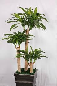 small indoor tree solidaria garden