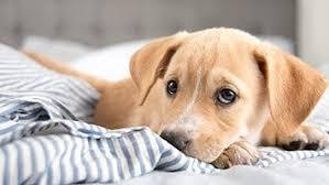 dog supplies dog u0026 puppy accessories u0026 products petco