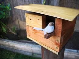 sparrow birdhouse plans free