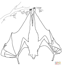 fruit bat coloring free printable coloring pages