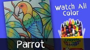 parrot coloring pages kids watchalicolor
