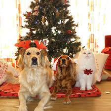 are christmas ornaments dangerous for pets animalwised