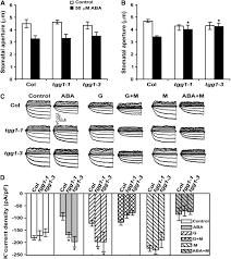 functional proteomics of arabidopsis thaliana guard cells uncovers