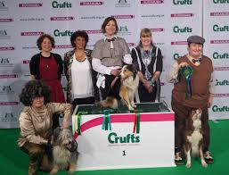 australian shepherd crufts 2015 paw performance u2013 kim lyddon crufts freestyle finalist heel work