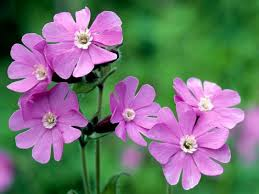 flowers uk more than 600 species of flowers in bloom on new year s