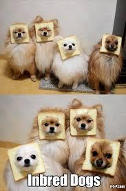 Dog Jokes Meme - inbred dogs silly bunt
