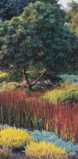 57 best japanese blood grass images on pinterest ornamental