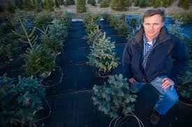 michigan u0027s christmas tree industry is thriving msu expert offers