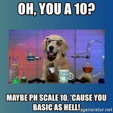 Oh You Dog Meme Generator - oh you a 10 maybe ph scale 10 cause you basic as hell