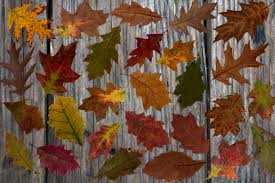 free images tree plant flower pattern autumn colorful