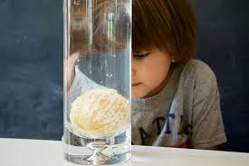 Materials Sink In Water by Orange Buoyancy Science Experiment Playdough To Plato
