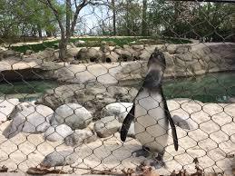 children u0027s zoo ready for 2016 season wane