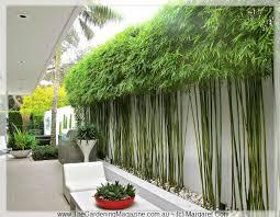 Bamboo Garden Design Ideas 1000 Ideas About Bamboo Garden On Pinterest Awesome Inspiration