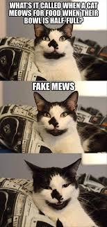 Cat Meme Funny - funniest cat memes 20 pics funnyfoto funny pictures videos