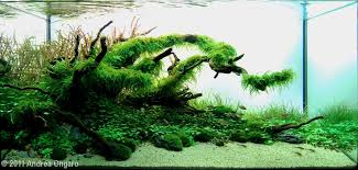 How To Aquascape A Planted Tank The Nature Style Planted Tank Aquascape Awards