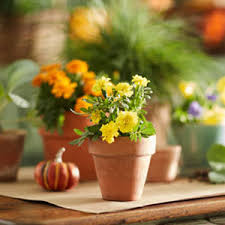 Garden Club Ideas Mums Garden Club
