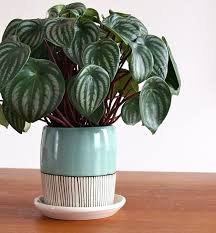 the definitive guide to easy indoor plants my mom used to grow
