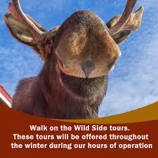 Alaska wildlife tours images Home awcc jpg