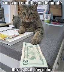 Mere Cat Meme - funny cat pictures cats dont give cuddles on demand cat memes