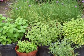 Kitchen Herb Garden Design 144 Best Growing Herbs In Containers Images On Pinterest Growing