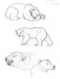 polar bear sketches wetcanvas