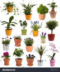 planting flowers in pots darxxidecom