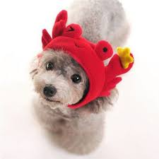 Cute Small Dog Halloween Costumes 401 Pet Clothing Images Pet Costumes Animal