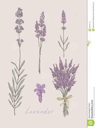 88 best lavender images on lavender