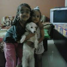american eskimo dog price in kolkata customer of the day u2013 dogs for sale u0026 puppies for sale from india