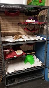 Cheap Rat Cage All About Rats Pet Rats Toronto U2014 Rat Emporium Toronto