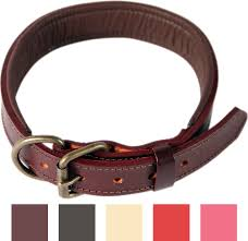Comfortable Dog Collar Dog Collars Free Shipping At Chewy Com