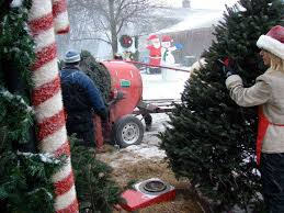 hinkemeyer christmas tree farm rice mn minnesota grown