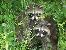 California wild animals images Feeding wildlife may actually hurt them california outdoors q and a jpg