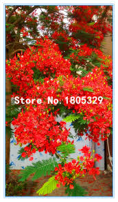 tree seedling wholesalers lizardmedia co
