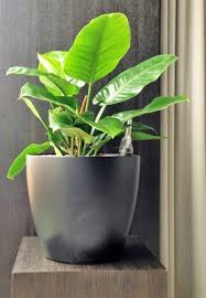 sales of plants for offices