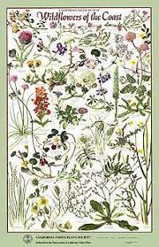 posters and prints u2013 california native plant society