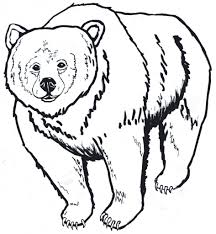 real animal coloring pages outline of a bear wallpaper download cucumberpress com