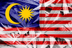 Maylasia Flag Malaysia Flag On Cannabis Background Drug Policy Legalization