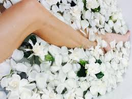 Gardenias by 100 Gardenias Luxury Flower Box High Quality Flowers