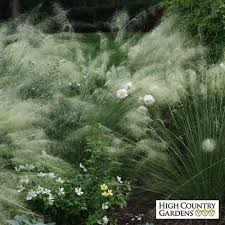 18 best grasses for home gardens images on