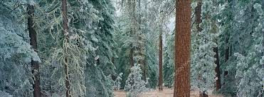 panoramic photo of black butte forest oregon panos