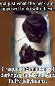 Cute Cats Memes - cute cat memes harry potter cat memes wattpad