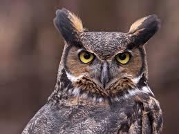 what does wood symbolize great horned owl symbolism wild gratitude