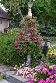 climbing clematis on lamp post with annuals petunias and dahlias
