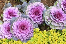 list of fall flowers autumn blooming plants u2013 what are some fall blooming perennials